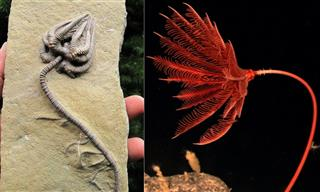 10 Unspoiled Fossils of Animals & Other Items Explained