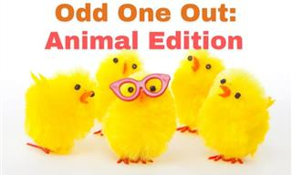 QUIZ: Find the Odd One Out - Animal Edition!