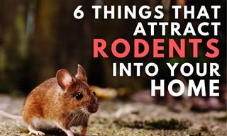 Rodent Alert: Ways You May Be Inviting Mice into Your Home