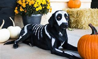 20 Adorable Pet Costumes to Make Halloween Sweeter