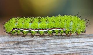 18 Amazing Before and After Photos of Caterpillar Transformations