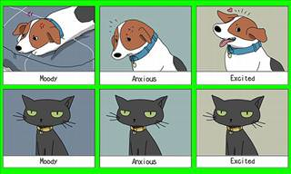 20 Hilarious Memes Showing Cat & Dog Differences