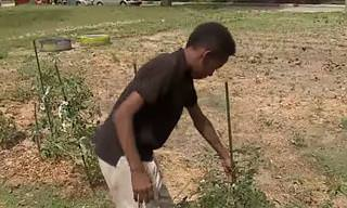 Young Urban Gardener