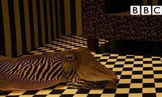 How Would a Cuttlefish Camouflage When In a Living Room?
