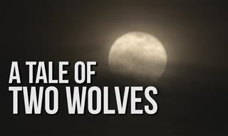 Spiritual: A Tale of Two Wolves
