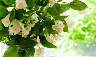7 Fragrant Houseplants for a Nice Smelling Home