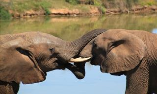 These Points Prove That Animals Are Smarter Than We Think
