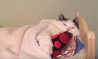 Cute Cats Cuddling With Stuffed Animals