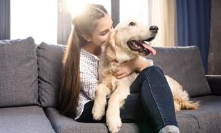 Study Finds Dogs React Positively to the Words 'I Love You'
