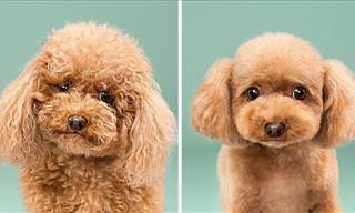 Before & After: 8 Cute Doggy Haircuts