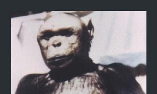 The Legend of the 'Humanzee' - Half-Human and Half-Ape