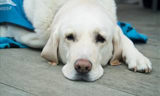 8 Signs Your Pet Needs To See a Vet