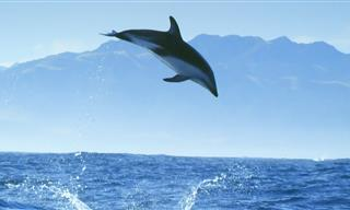 Want to Go Diving With Dolphins? Of Course You Do!