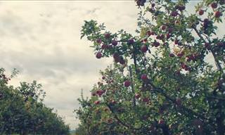 This Moving Film Says You're as Beautiful as an Apple Tree