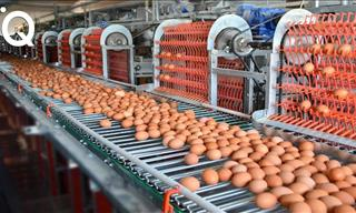 These Food Industry Machines Are Simply Astonishing!