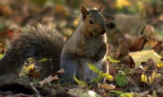 Incredible Nature: The Epic Flight of the Squirrel!