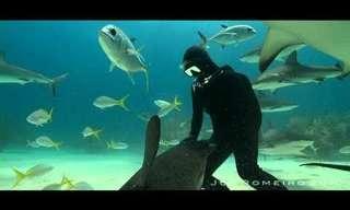 The Shark Dancer - Amazing!