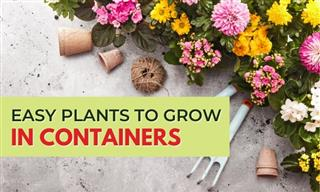 These Plants Will Thrive in Your Container Garden!