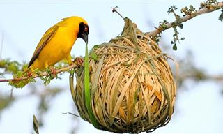 When Animals Become Artists: 15 Weird & Amazing Bird Nests