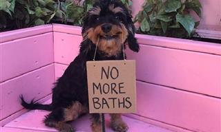 This Sweet Pup Some Protest Signs on Behalf of All Dogs