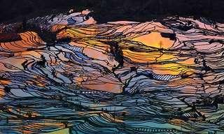 20 Breathtaking Rice Field Landscapes