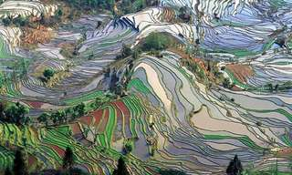 Stunning Rice Terraces from Around the World!