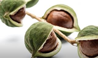 Why Are Macadamia Nuts Twice As Expensive As Other Nuts?