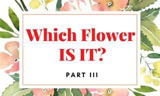 QUIZ: Which Flower IS IT? (Part III)