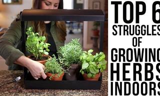 The Biggest Struggles & Solutions of Growing Herbs Indoors