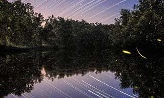 These Dream-Like Photos of Luminous Fireflies Are Stunning.