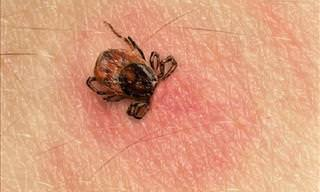 6 Diseases Caused by Ticks