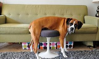 Adorable Photos: Pets vs. Furniture