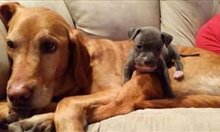 Animals With Their Best Friends