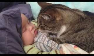 Cats and Babies Make for Double the Cuteness!