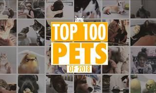 The Absolute BEST Pet Videos of 2018!