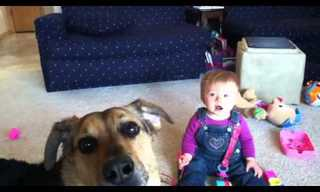 Bubbles, Dogs and Babies Laughing - Adorable!