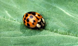 Attracting Beneficial Garden Insects