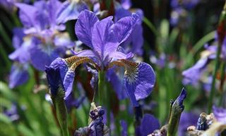 10 Low Maintenance Perennial Plants With Lovely Flowers