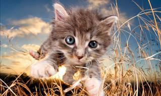 10 Pouncing Kittens