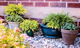 6 Things Your Plant May Be Telling You