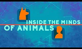Inside the minds of animals