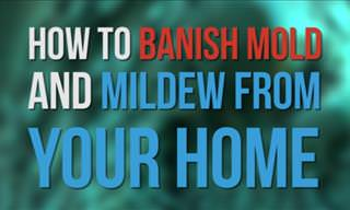 5 Ways to Rid Your Home of Mold