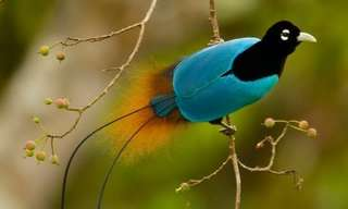 The Gorgeous Birds of Paradise