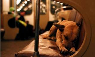 The Scrappy Subway Dogs of Moscow