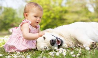 Pets Show Their Affection for Babies