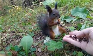 Hilarious! Baby Squirrel Freezes When Given a Fresh Snack