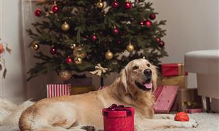 Christmas Trees and Pets: A Few Safety Tips