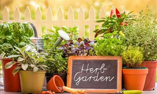 6 Tips For Growing a Herb Garden