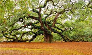 The World's Most Beautiful Trees