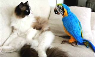 These Parrots Just LOVE Annoying Cats!